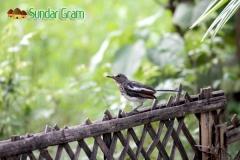activity-bird