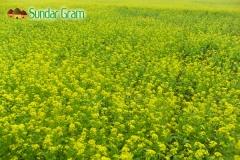 sundar-gram-field
